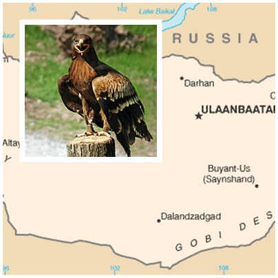 Torna In Mongolia Il Festival Delle Aquile
